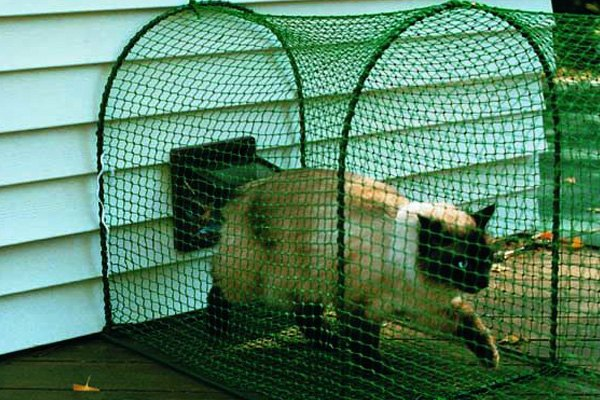 Surprising Kittywalk Systems Deck And Patio Outdoor Cat Enclosure Home Interior And Landscaping Analalmasignezvosmurscom